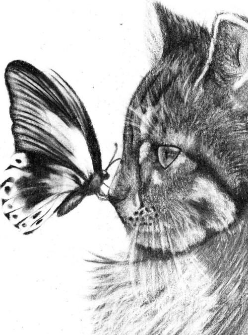 Imágenes De Dibujos A Lápiz De Amor Corazones Rosas Y Animales