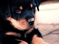 Imágenes de perros para niños, fotos de las mascotas más bonitas