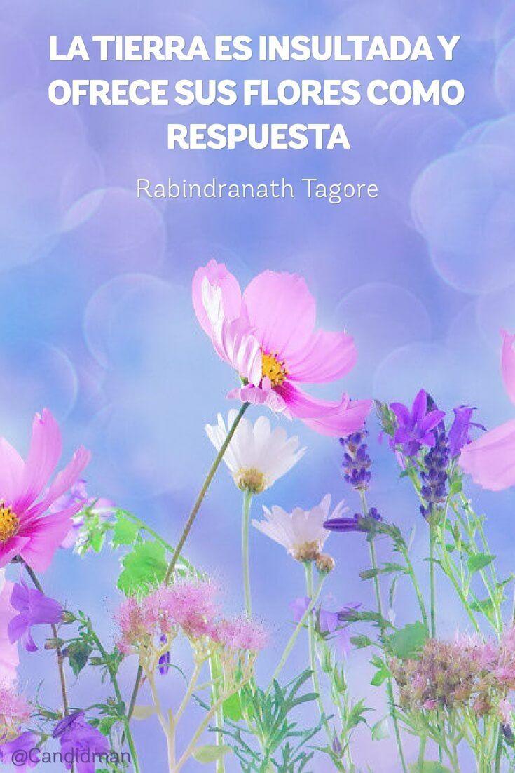 Imagenes De Flores Con Frases Y Reflexiones De La Vida Imagenes