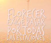 Imágenes de flores con frases y reflexiones de la vida